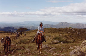 High Country Horses - Accommodation Yamba