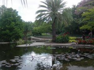 Brisbane City Botanic Gardens - Accommodation Yamba