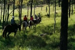 Hunter Valley Horse Riding and Adventures - Accommodation Yamba