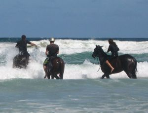 Pegasus Park Equestrian Centre - Accommodation Yamba
