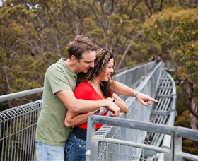 Valley of the Giants Tree Top Walk - Accommodation Yamba